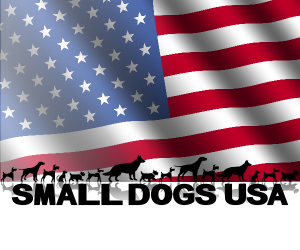 small-dogs-usa300x250.jpg