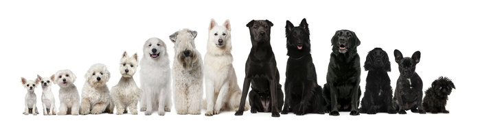 Group-of-black-and-white-dogs-sitting-in-a-row.jpg