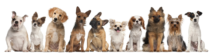 Group-of-dogs-sitting.jpg