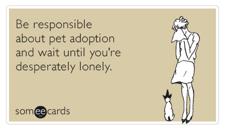 Small Dog Adoption Process