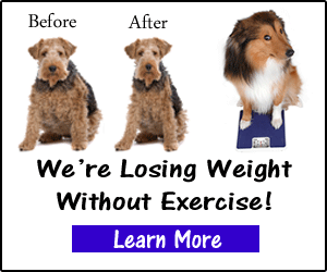 Fat Dog Weight Loss System